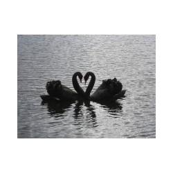 Der Schlüssel zum Herzen -...